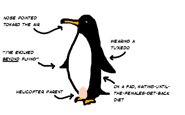 Penguin: wearing a tuxedo, has evolved beyond flying.